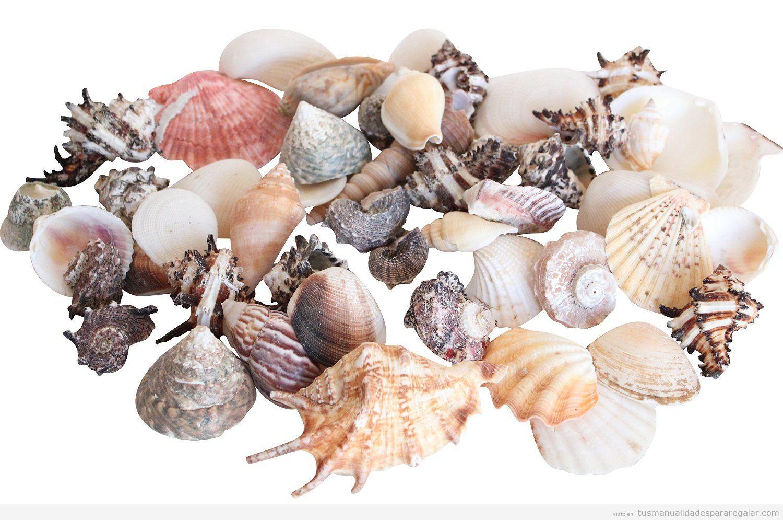 Comprar online caracolas y con 2chas marinas